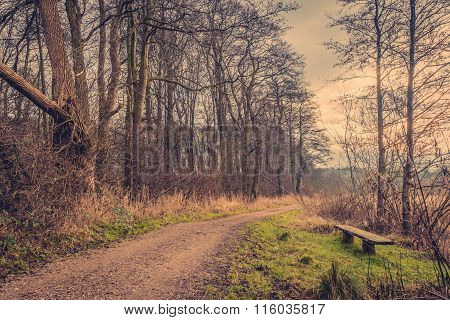 Bench By A Road In The Forest