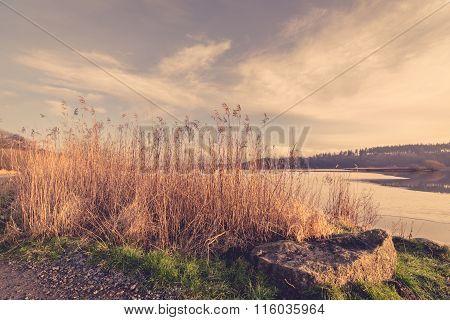 Reeds In The Winter At A Frozen Lake