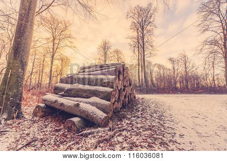 Wood Stack In A Forest Sunrise