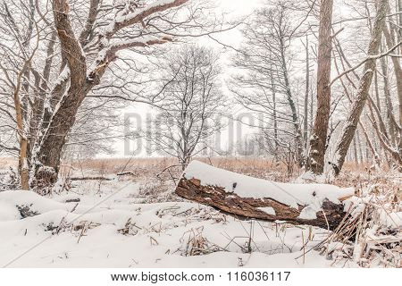 Snow On A Tree Log In The Forest