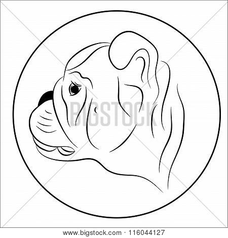 Portrait of an English bulldog puppy, vector