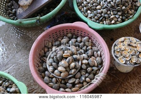 sale of mussels