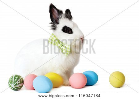 Fluffy White Rabbit With Easter Eggs Isolated On White Background.