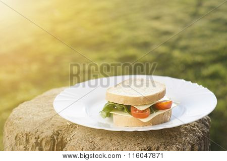 Sandwich with salad, tomatoes, cheese on a wood and natural background. Grass like a background