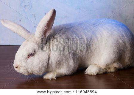 White Rabbit Sitting On Table