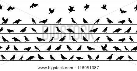 Birds Sitting on Power Lines. Seamless Pattern. Vector Illustrat