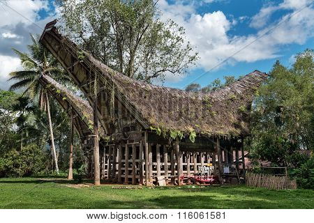 Tongkonan Traditional Houses  In  Buntu Pune Village