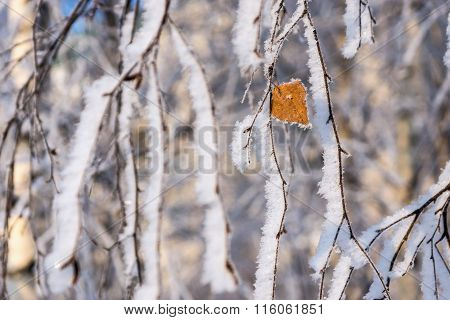 Branches Of Trees With A Lonely Leaf And White Snow
