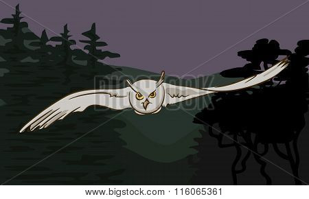 Flying Owl With Outstretched Wings