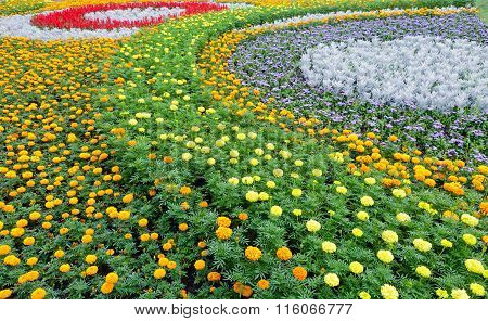 Summer Colorful Flowerbed. Background.