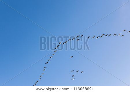 Migrant Bird In The Sky