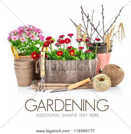 Spring flowers in wooden bucket with garden tools. Isolated on white background. Stock photo