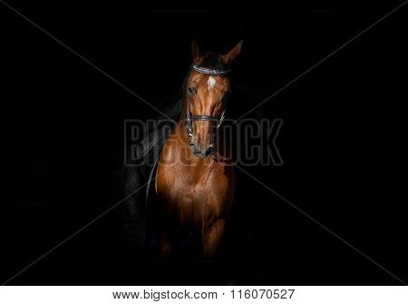Horse And Rider In Darkness