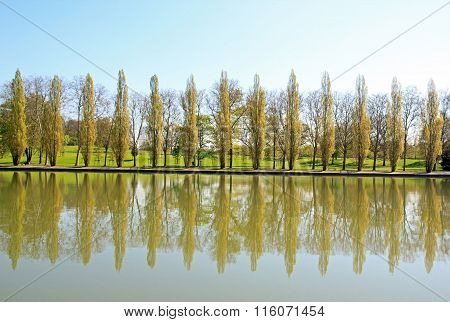 row of poplars, a visurow of poplars, a visual echo of the water.al echo of the water.