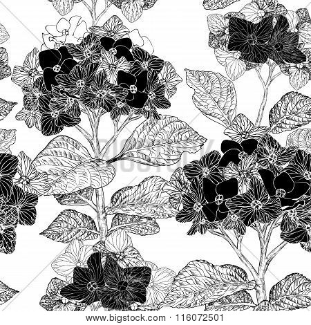 Floral Seamless Pattern With Hydrangea Flowers On A Background (black And White)