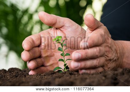 Businessman's Hands Protecting Plant On Land