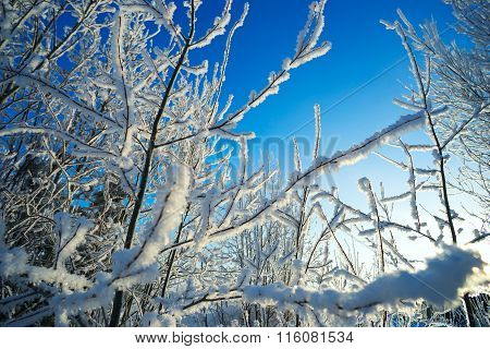 Branches Covered With Hoarfrost On Blue Sky Background