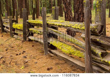 Moss On A Split Rail Fence
