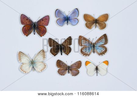 Collection Of Eight Colored Butterflies On White