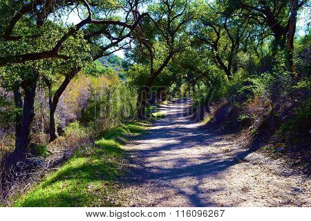 Trail Thru Forest