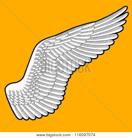 Drawing of bird's wing with detailed feathers on orange background. Thick outer contour is easily removed. Vector illustration