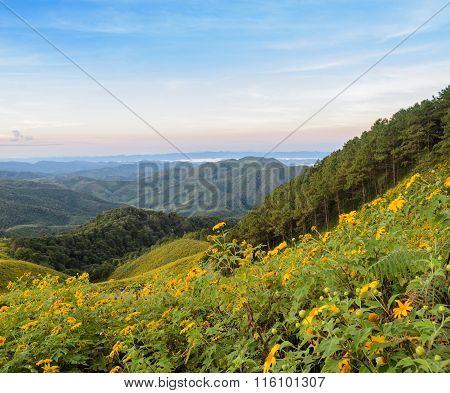 Beautiful Mountain Sunrise Nature Scene With Wild Mexican Sunflower Valley