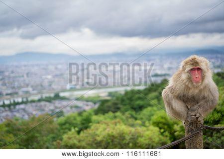 Monkey on top of trunk in Arashiyama mountain, kyoto