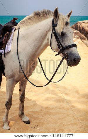 Closeup White Horse With Harness Saddle On Beach Against Sea