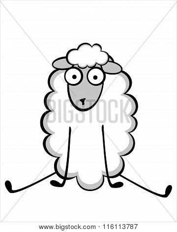 Funny Young Sheep