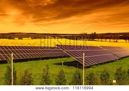Solar panels on green grass at sunset
