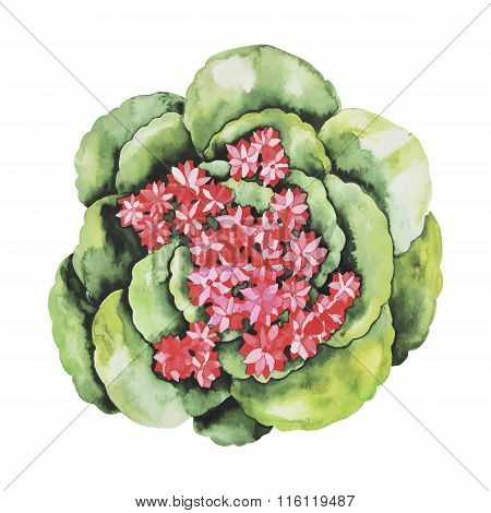 Watercolor cute succulent