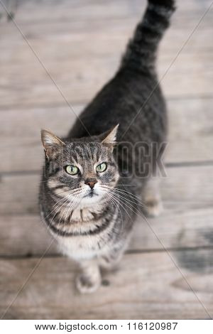 Cute Domestic Cat