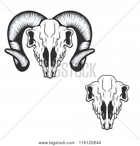 Ram Skull. Vector Illustration.
