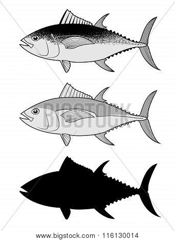 Set Of The Tuna In Vector.