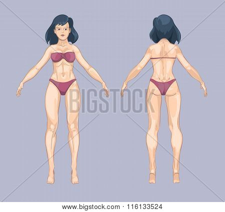 Woman or female body in cartoon style. Front and back standing pose. Vector illustration