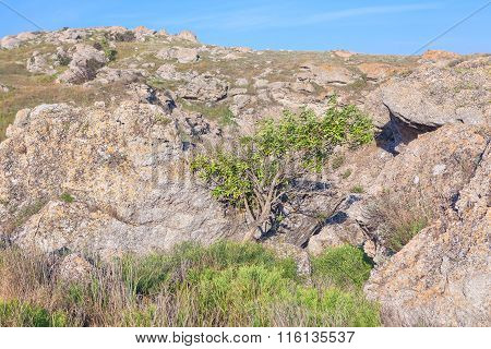 tree in the dry place