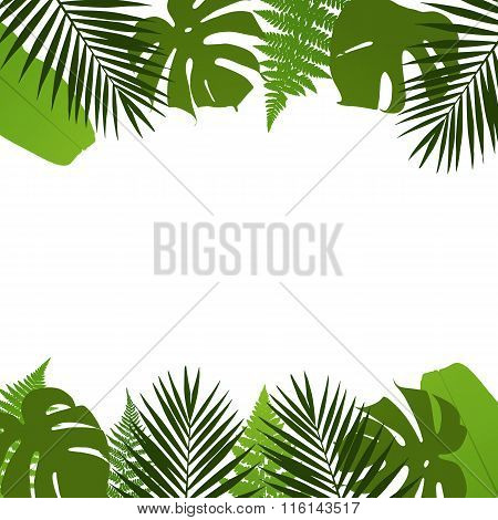Tropical leaves background with palmfernmonstera and banana leaves. Vector illustration