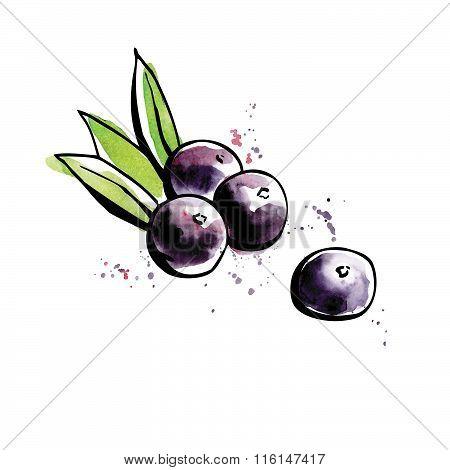 Superfood Acai Berries