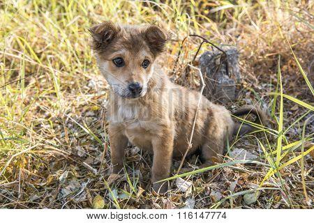 Thai sad little puppy , vintage color