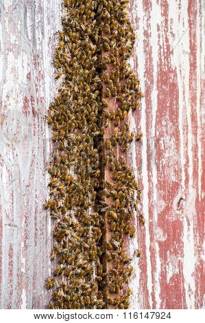 Bee Nest On A Barn