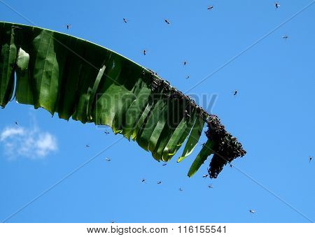 wasps clustered