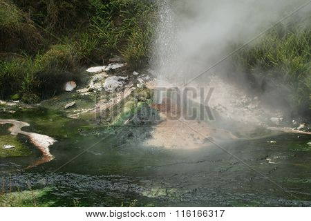Waimangu Valley Geyser