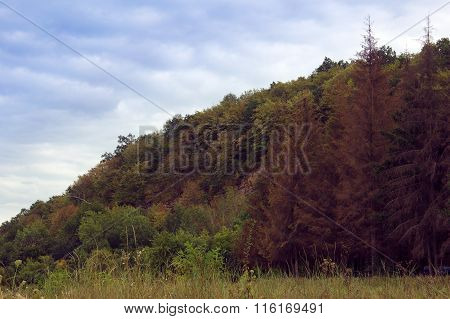Landscape Of A Hill With Coniferous Trees And Sky