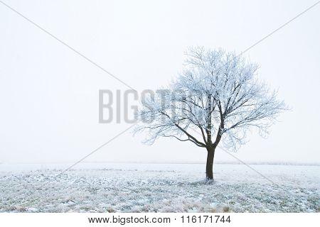 Frozen tree on a field
