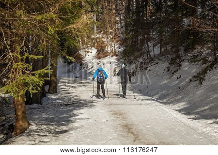 Two Men On Skis In The Winter Woods On A Sunny Day