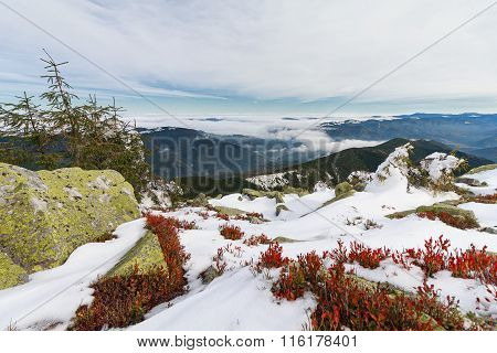 Mountains, Green Gorgany  And Red Leaves Blueberries. Carpathians