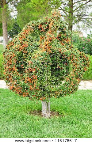 Single tree in Turkish park