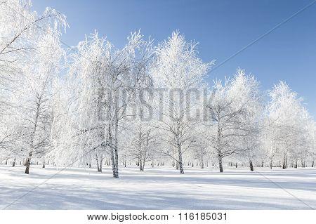Winter Scene In Northern Idaho