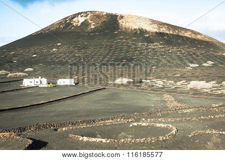 Vineyards In La Geria, Lanzarote, Canary Islands, Spain.