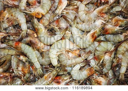 Shrimp Raw Sea food Top View